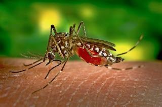 Cara Sederhana Untuk Mengusir Nyamuk