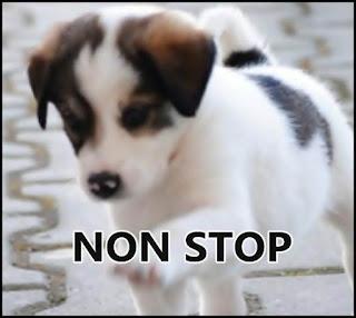 lista cabinete veterinare non stop galati