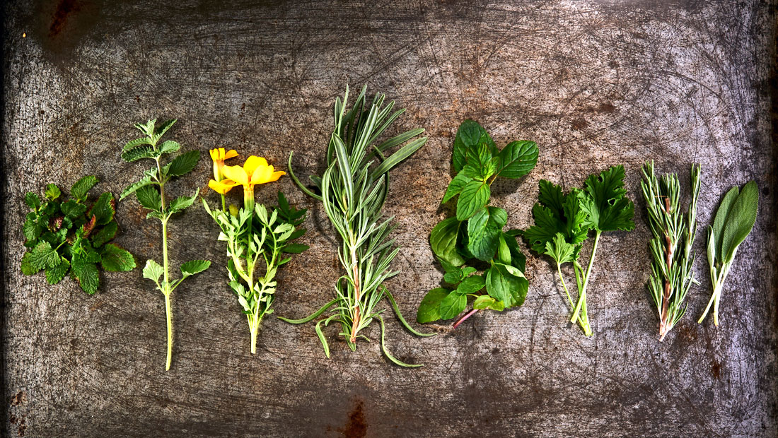 8 plants that repel mosquitos naturally minion scoop for What plants naturally repel mosquitoes