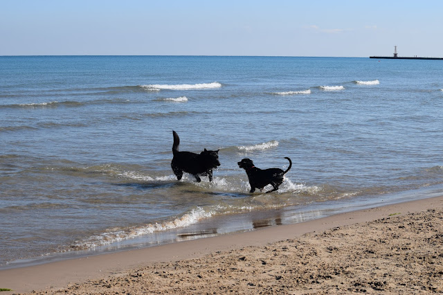 Montrose Dog Beach, Chicago, dogs, taylor and capone
