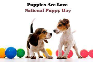 National Puppy Day Wishes Images download