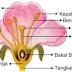Inilah Cara Penyerbukan Bunga Anggrek Besrta Penjelasannya Secara lengkap