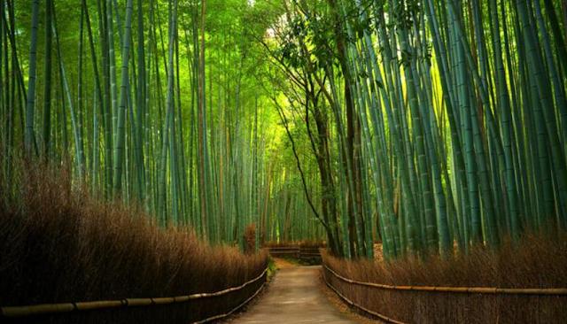 Rimba Bambu Keputih