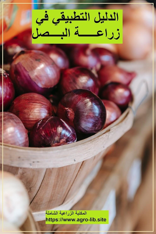كتاب : الدليل التطبيقي في زراعة البصل