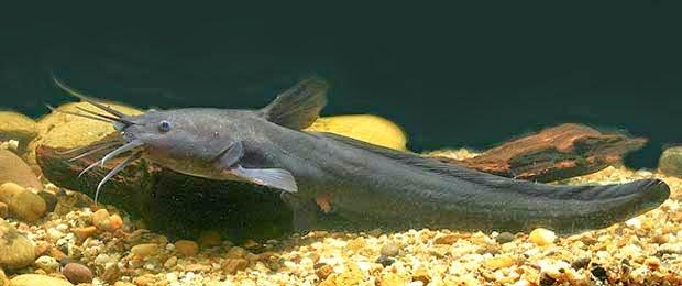 10 Ikan Laut Paling Berbahaya Bagi Manusia ~ Life Style ...