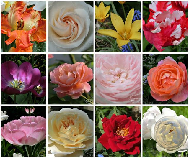 сад, розы, тюльпаны