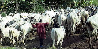A Fulani cattle herder in West Africa: Pastoralists need refuge for their animals too. (Image Credit: Brendertogo, via Wikimedia Commons) Click to Enlarge.