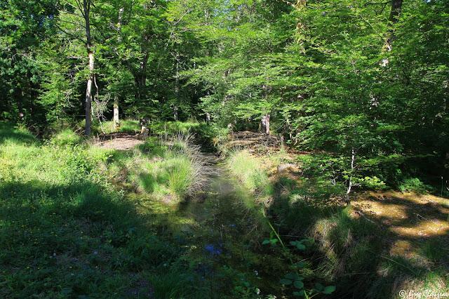 Canaux de la mare aux Evées au Printemps, Forêt de Fontainebleau