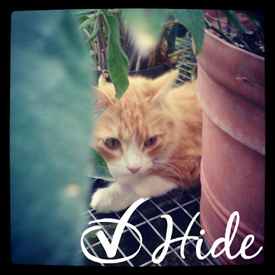 Cats like to hide