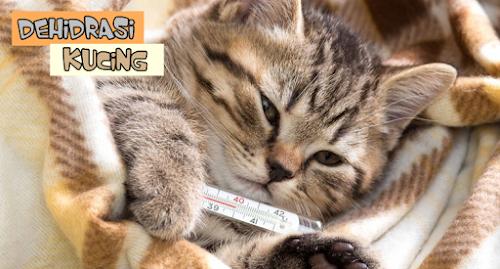 Dehidrasi Kucing