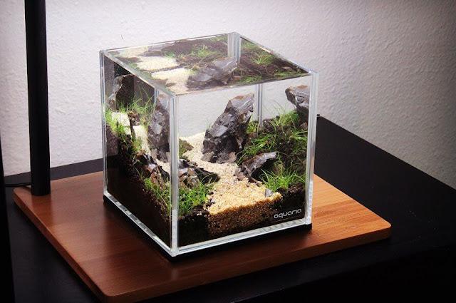Harga Aquascape Mini Terbaru