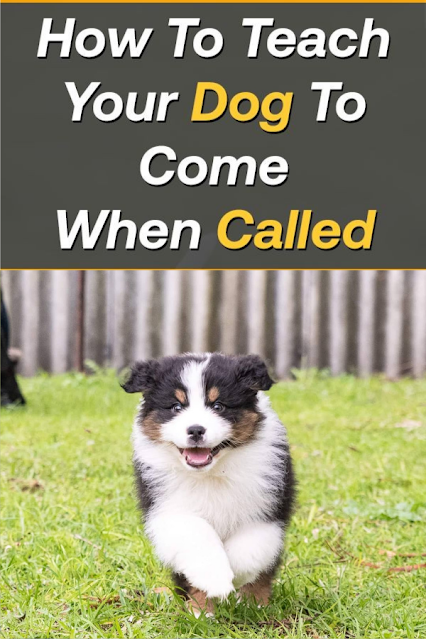 How To Train a Dog To Come When Called? All The Tips and Tricks