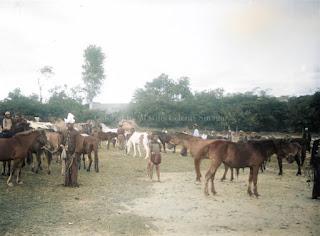 sekumpulan kuda dan orang orang