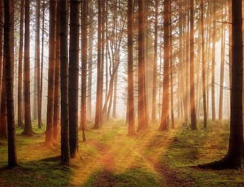 ILUTOR - Aplikasi Pendeteksi Illegal Logging