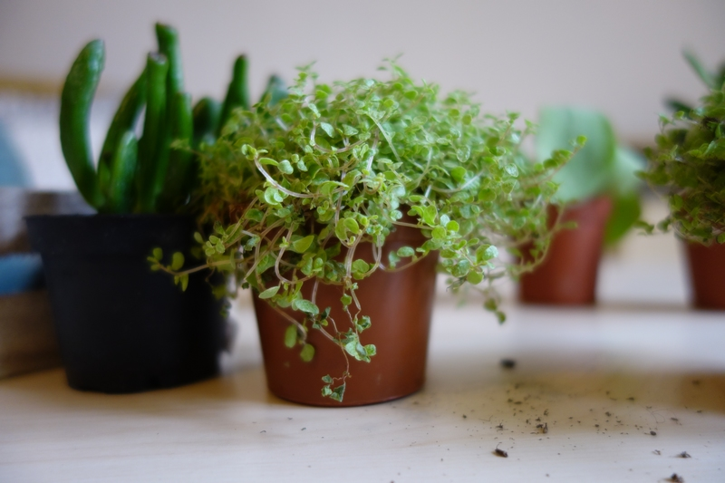 DIY : Ma composition de plantes grasses toute simple ! www.by-laura.fr