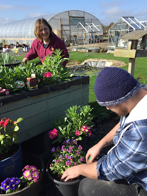 Volunteer and gardener planting flowers in large containers