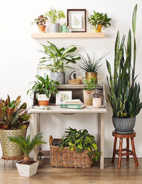 Indoor Plants Air Purifying