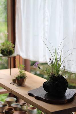 山野草盆栽教室のアトリエの風景 棚の上の山野草盆栽3点