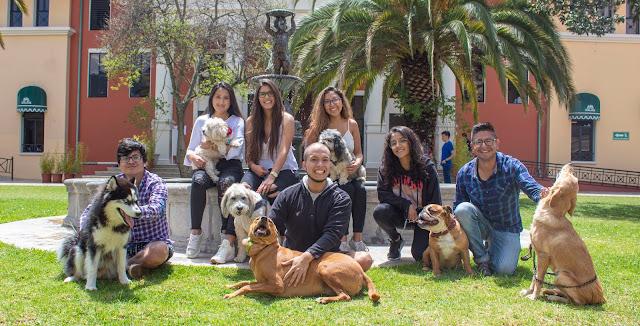 Dragones Pet Friendly: una iniciativa al rescate de los animales de compañía