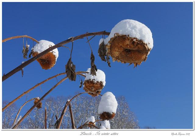 Lincoln: In winter attire