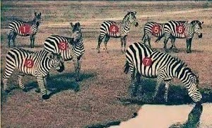 EYE TEST: Which Of Them Is Not A Zebra?