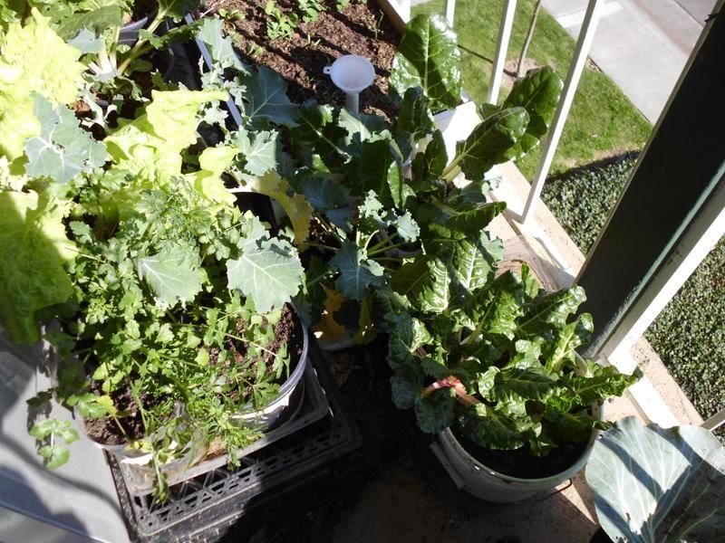 Sunny Garden Feb 25