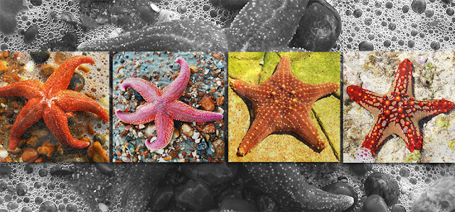 Mengenal Bintang Laut: Hati-hati dengan Biota Laut Ini.
