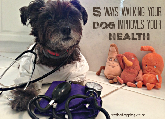 5 ways walking your dog improves your health