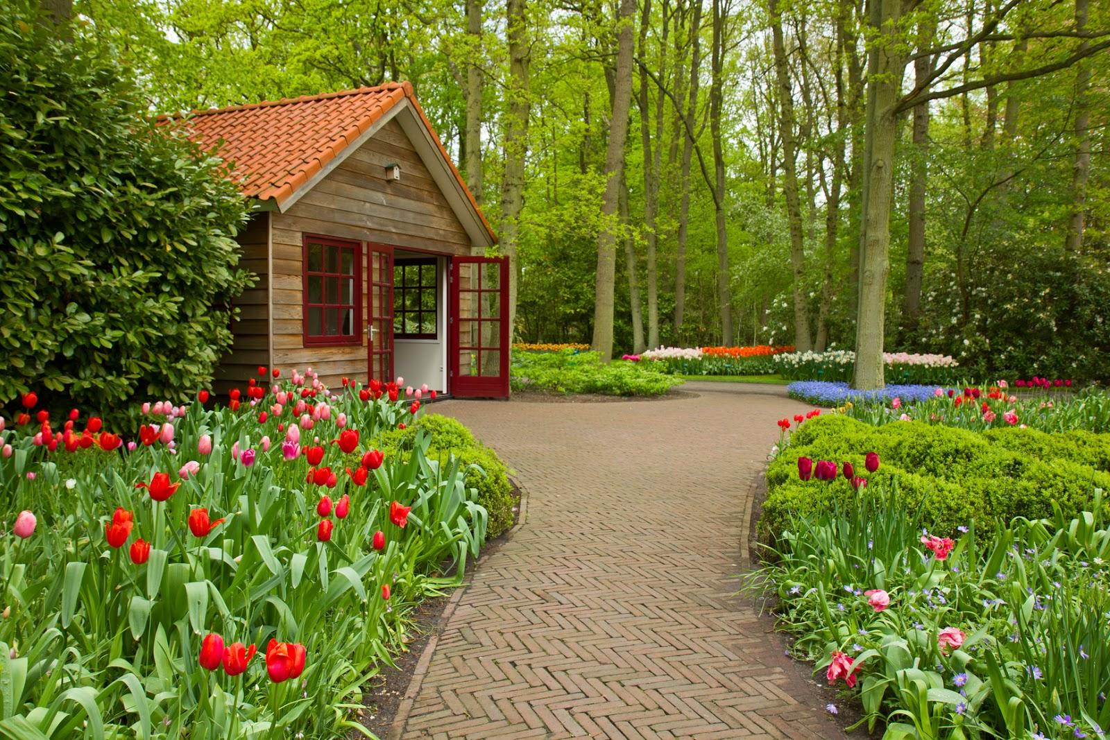 Unique wallpaper plantas flores y jardines exuberantes - Fotos de jardines ...