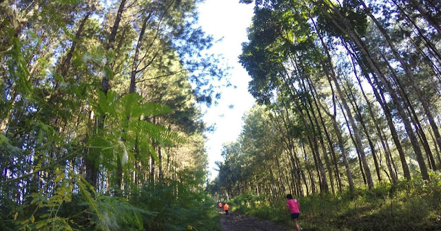 Banyuwangi Ijen Green Run 2017.