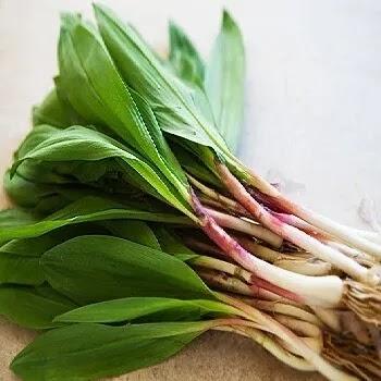 रान कांदा, wild leeks vegetables name in Marathi