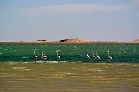Baie de l'étoile : une diversité et une densité aviaire comparable au Banc d'Arguin ?