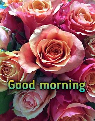 good morning yellow rose images