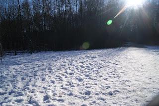 Eine lichte Fläche voller Schnee auf dem Boden