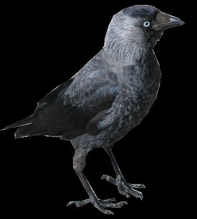 Overlevende high school dating raven svar