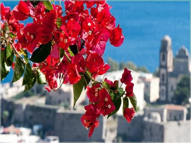 صور ورد - ورد احمر 6 | Flowers Photos - Red Roses 6
