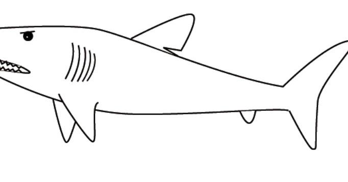 48 Inspirasi Terbaru Sketsa Ikan Polos
