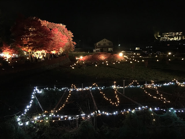 紅葉回廊 2015 momiji tunnel maples corridor lake kawaguchi kawaguchiko red leaves autumn fall night illumination