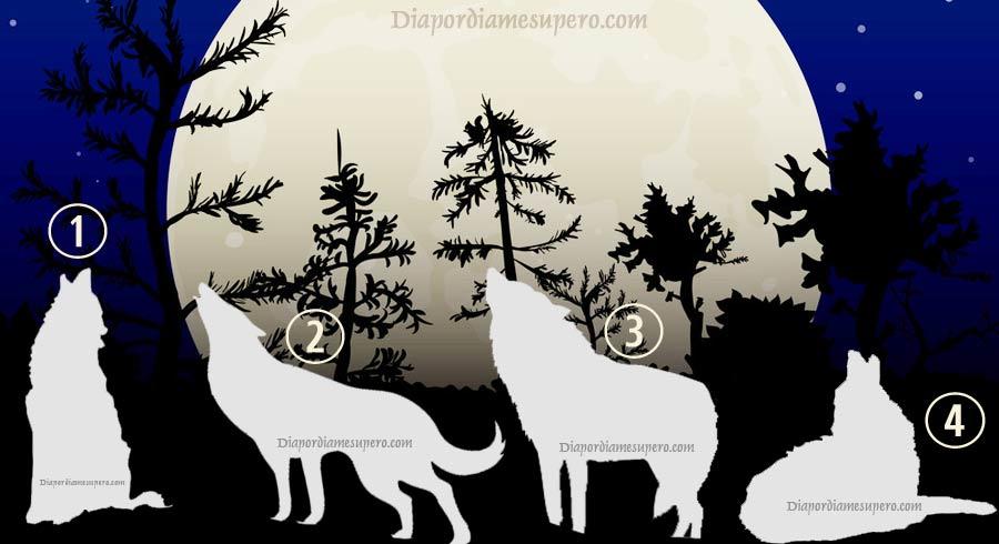 Test: Elige el lobo que simbolice independencia y averigua cuándo necesitas la soledad