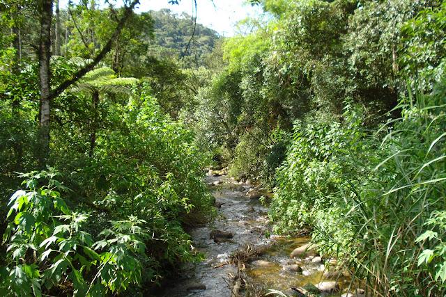 Riacho em Visconde de Mauá, foto de Marcelo Migliaccio