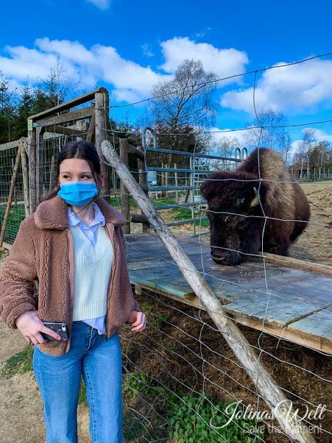 Bisons im Tierpark Rheinböllen
