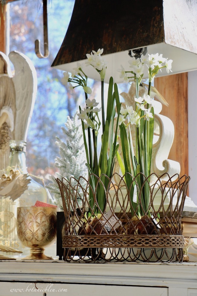 French Country Christmas Event 2019 faux paperwhites in a French wire basket