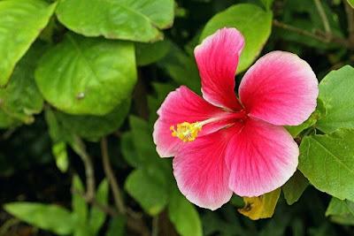 Cool Looking Flower