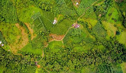 Variedad de cultivos protege biodiversidad de fincas