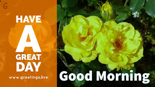 Best positive images.. yellow rose flowers good morning Start every day with good positive feel..