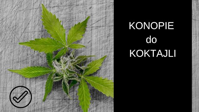 https://zielonekoktajle.blogspot.com/2018/11/konopie-idealny-skadnik-koktajli-zobacz.html
