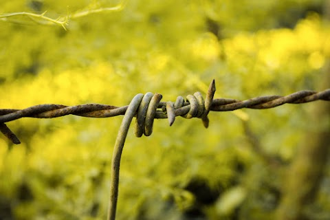 Barbed Wire HD Background Free Stock [ Download ]