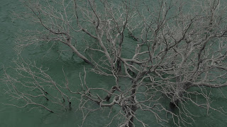 Image from the film The Lake And The Lake, tree branches submerged in water.