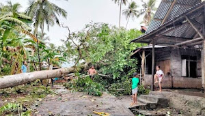 Dua Rumah Ditimpa Pohon Akibat Angin Kencang