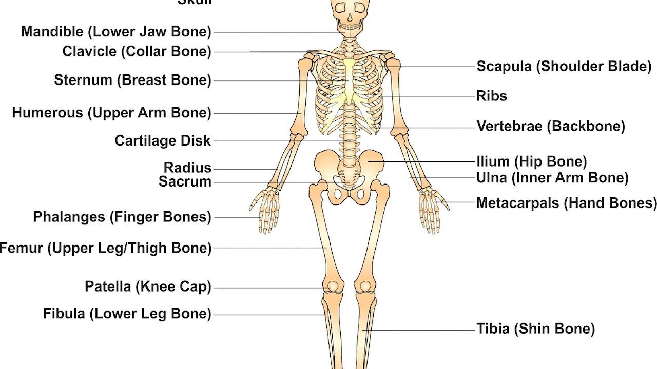 Knee - Knee Bone Name - Knee Choices